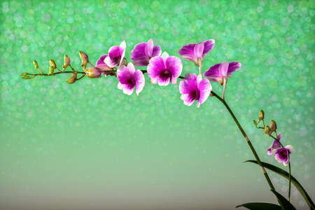 panicle: Orchid bouquet with a beautiful bokeh.blank space to put the text