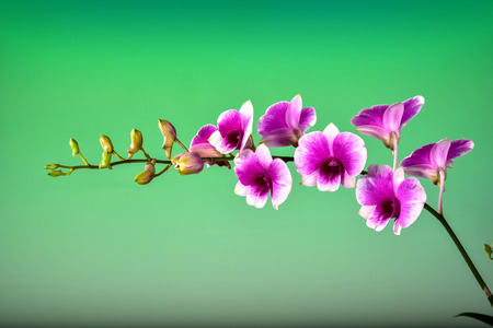 beautiful Orchid bouquet on green backgroung.blank space to put the text