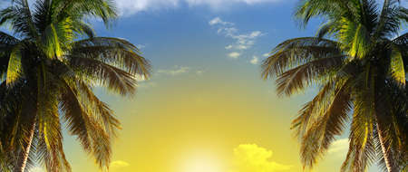 coconut palmtree on blue sky background with copy space for text