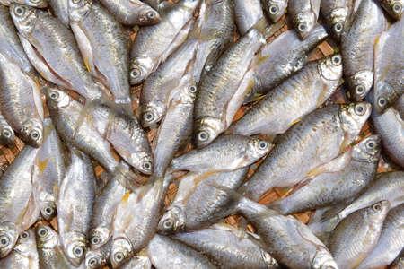 stockfish: Fresh fish - waiting for sun drying ; Countryside Thai food, Cheap and health food.
