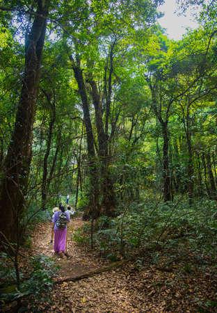 reis familie bos bos toerisme wandeling natuur avontuurlijke vakantie Stockfoto