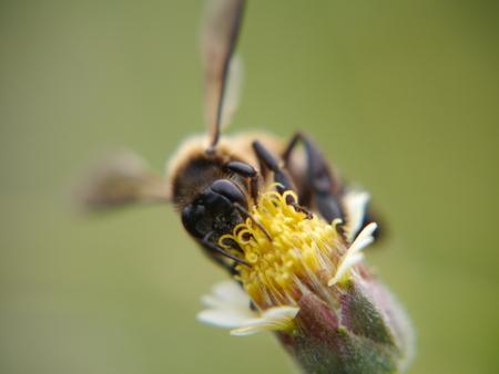 bee swarm: Flowers bee swarm