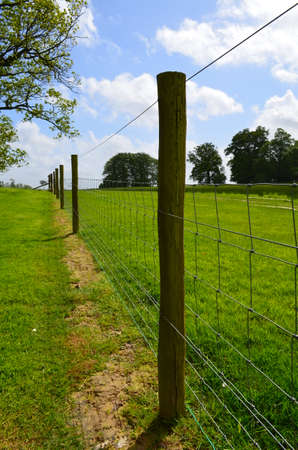 fencing wire: Barbed wire fence in Sussex countryside