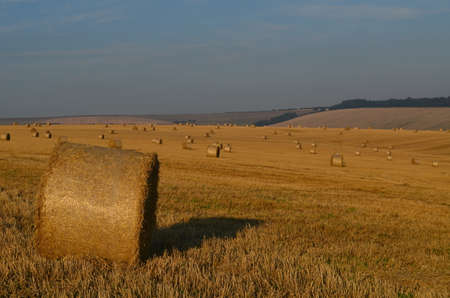 Sussex hay field at harvest time  photo