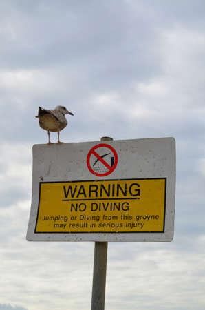 no diving sign: Warning no diving sign