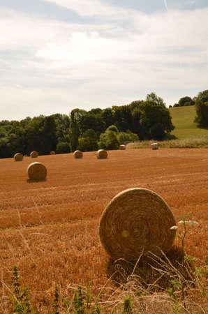hay field: Fieno campo in Inghilterra meridionale