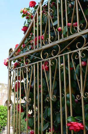 garden gate: Ornate gold painted wrought iron garden gate