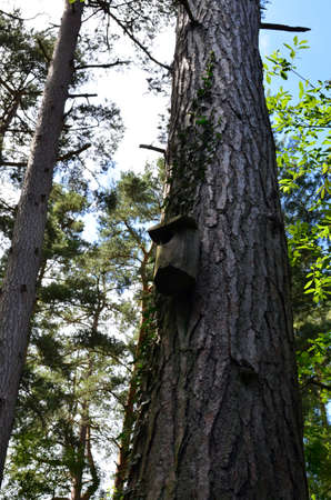 Bird nesting box on the trunk of a large pine tree.