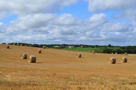 Hay field in rural West Sussex.