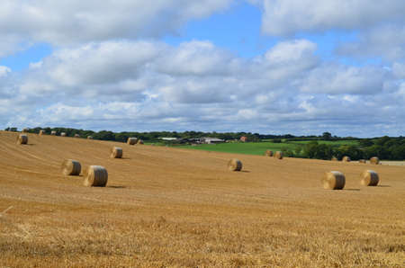 west sussex: Hay field in rural West Sussex.
