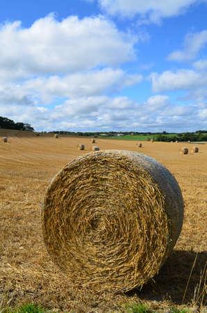 sussex: Harvest time in rural Sussex.