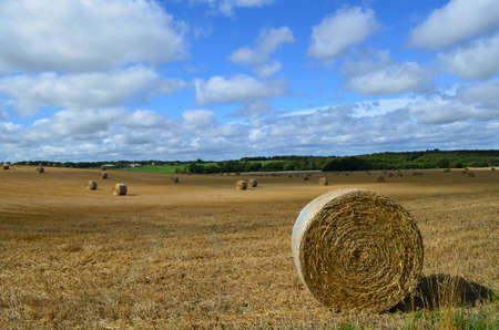 Round hay bales in a English hay field.