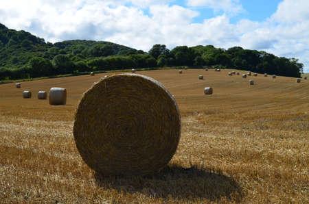 Hay field in rural Sussex.