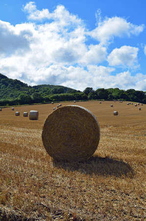 Bales of hay in a Southern England farm field.
