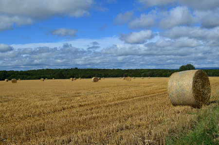 Harvest time in West Sussex in Southern England. Banco de Imagens