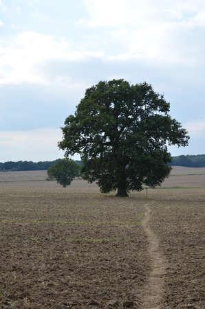 Public footpath through Sussex farmland. Banco de Imagens