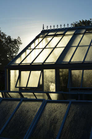Morning sunlight through a Victorian style greenhouse.