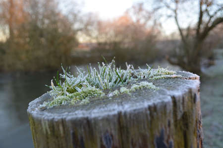 Frost covered wood log beside a pond.