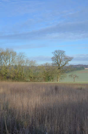 sussex: Sussex countryside during Winter.