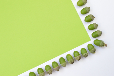 Green acorns in a row on green and white background with copy space