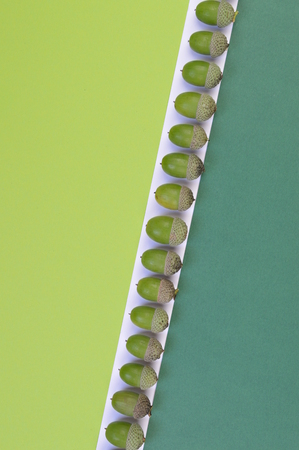 Green acorns in a row on light green, dark green and white background with copy space