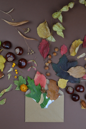 open envelope with autumnal greetings like colorful leaves, seeds, chestnuts, nuts and other fruits on brown background Standard-Bild