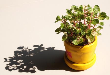 plant in pot: Plant pot