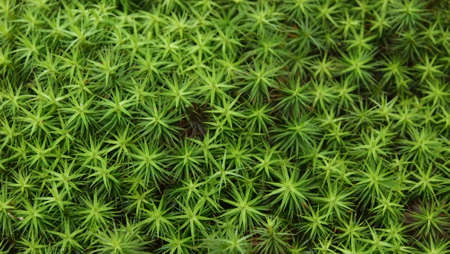 humid: Star Pattern Plant 2