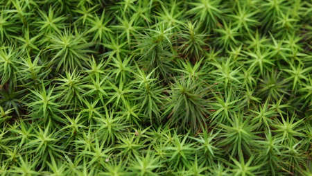 humid: Star Pattern Plant 1 Stock Photo