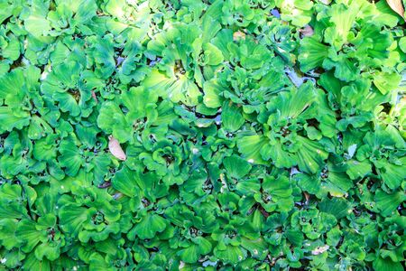 Green water weeds pattern Stock Photo - 18497952