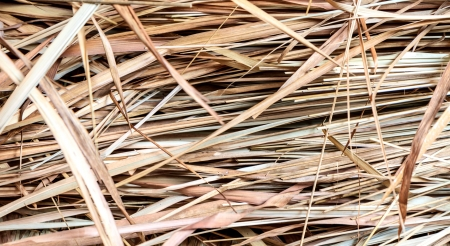 thatch: Thatch background Stock Photo