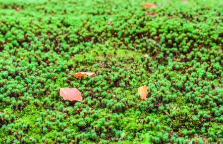 Japan moss background photo