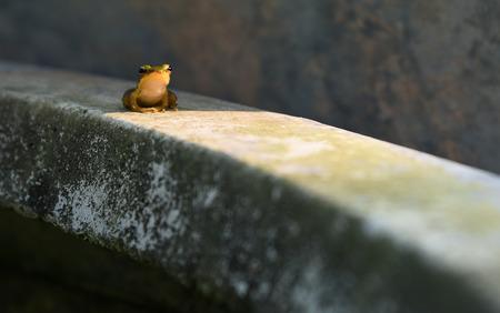 grog: small green grog sitting Stock Photo