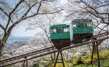 top down car: MIYAGI,JAPAN - APRIL 16 : A slope car makes its way down a trail of cherry blossoms from the top of a hill in Funaoka Castle Ruin Park, Japan on April 16, 2014.