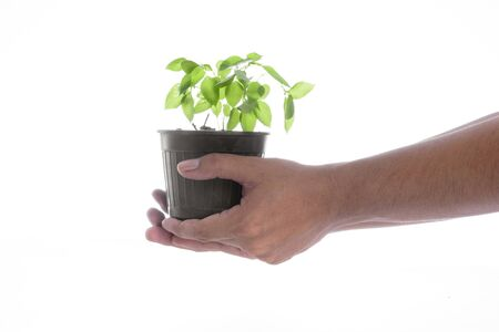 plant hand: Man hand holding a little green tree plant on white background Stock Photo