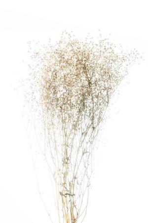 Soft focus gypsophila on white background