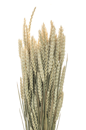 beardless: Stalks of wheat ears on white background