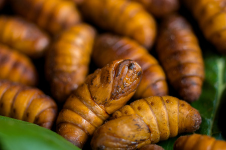 Yellow silkworm cocoon shell through the Silk Route, the brewing process, bringing silks to silk. photo
