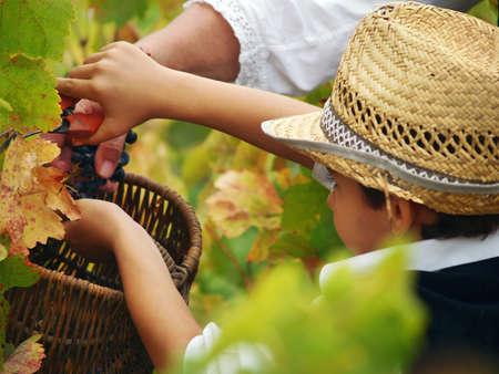 농부 여자가 프랑스에서 아이에게 포도를 잘라 가르친다