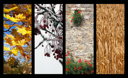 Four Seasons Stock Photo - 16389391