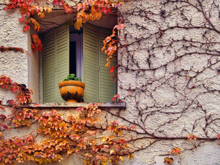 autumn background from colourful leaves at the wall