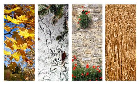 Four Seasons sur un fond blanc