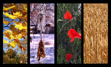 quatre saisons: Four Seasons Banque d'images