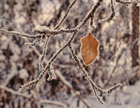frozen brunch with a leaf in winter Stock Photo - 17046069