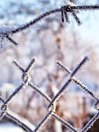 Frosted wire fence with a  barbed wires closeup with soft background  photo