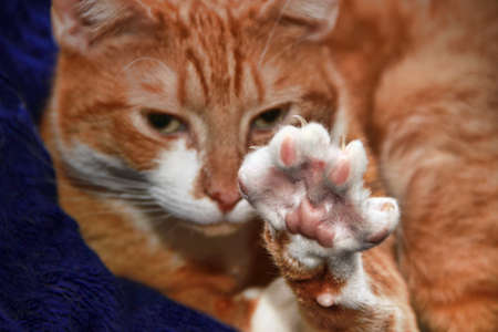 cat stretching: cute cat stretching : Paw with Claws