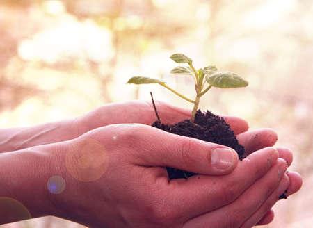 les mains avec une jeune plante