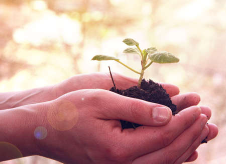replant: mani con una giovane pianta Archivio Fotografico