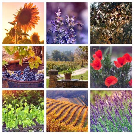 Provence Color Palettes