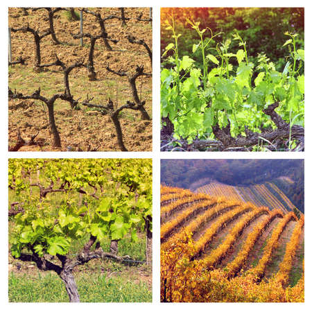 timelapse: Four Seasons In Provence: collage with 4 photos of vineyards ib different seasons